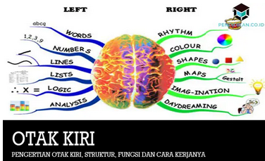 Pengertian Otak Kiri, Struktur, Fungsi dan Cara Kerjanya